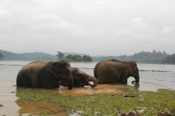 The Land of a Million Elephants