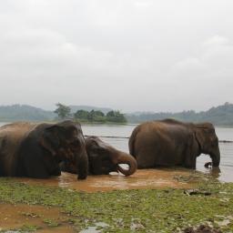 The Land of a Million Elephants