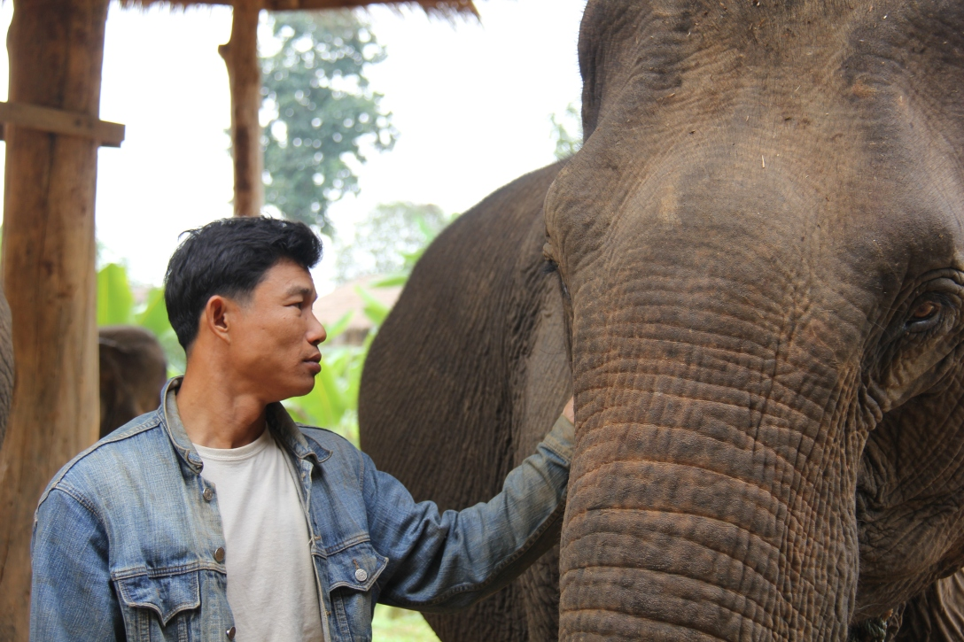 a mahout with his elephant at the ECC