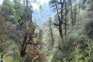 forest outside Ghorepani, Nepal