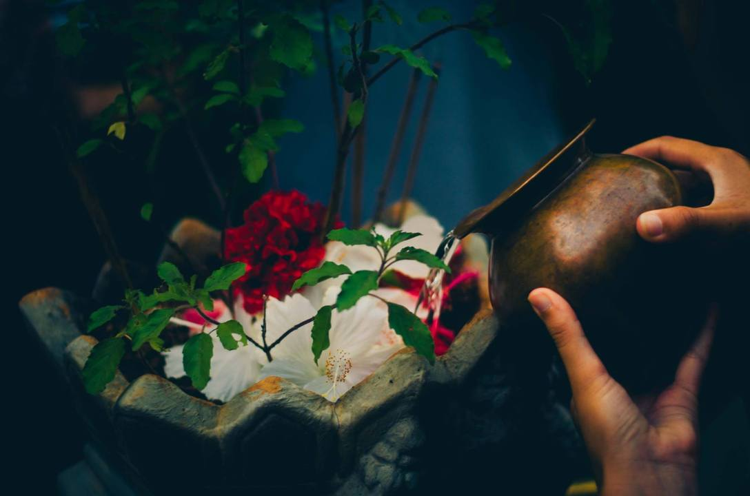 tulsi puja, photo by Max Menschel